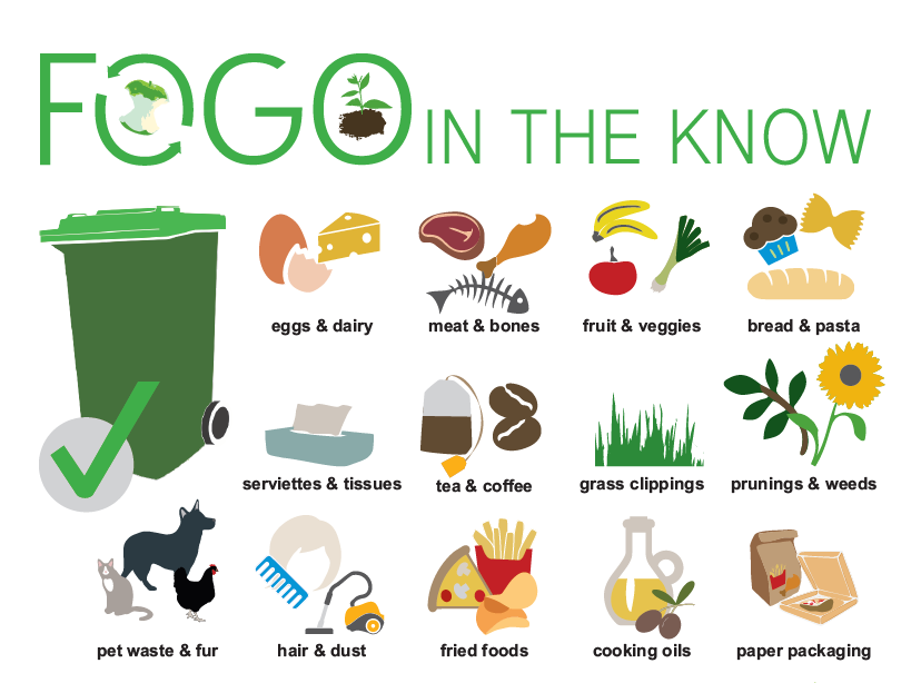 FOGO FAQs in the know